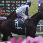 American_(horse)